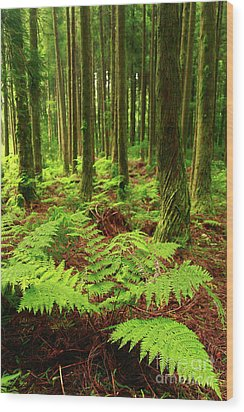 Ferns In The Forest Wood Print by Gaspar Avila