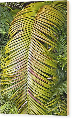 Wood Print featuring the photograph Ferns by Kate Brown