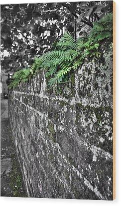 Ferns On Old Brick Wall Wood Print