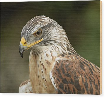 Wood Print featuring the photograph Ferruginous Hawk by Doug Herr