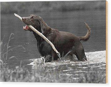 Fetch- Labrador Retriever Digital Art Wood Print by Gerald Marella