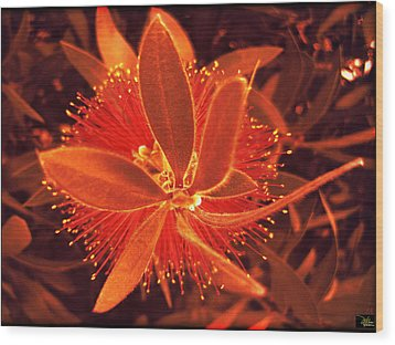 Fiber Optic Flower Wood Print