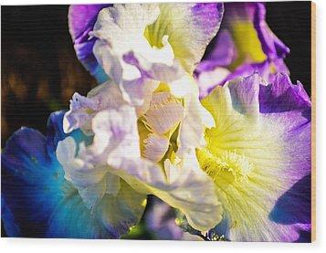 Fickle Iris  Wood Print by Mary Ward