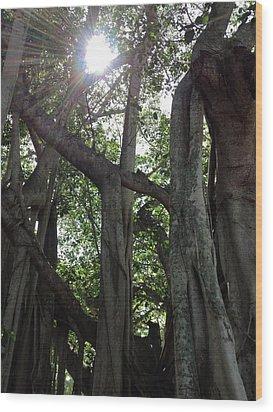 Ficus Altissima Wood Print