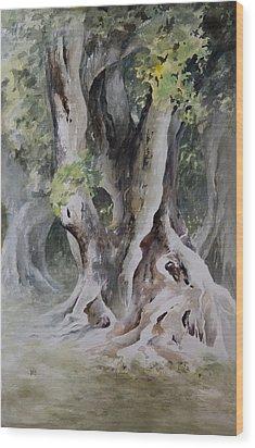 Ficus Aurea Wood Print by Rachel Christine Nowicki