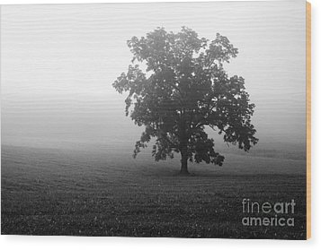 Field In Cades Cove Wood Print
