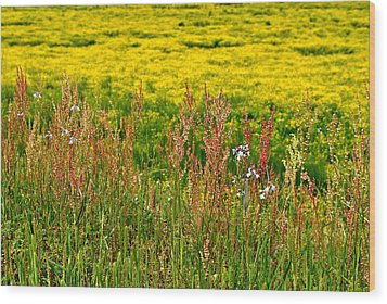 Field In Spring Wood Print by Beverly Hammond