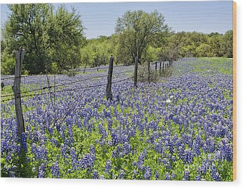 Field Of Bluebonnets Wood Print