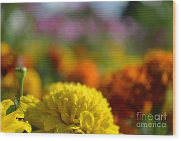 Wood Print featuring the photograph Field Of Carnations by Scott Lyons