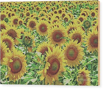 Field Of Dreams Wood Print by Robert ONeil