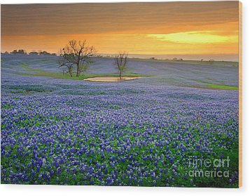 Field Of Dreams Texas Sunset - Texas Bluebonnet Wildflowers Landscape Flowers  Wood Print by Jon Holiday