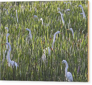 Field Of Egrets Wood Print