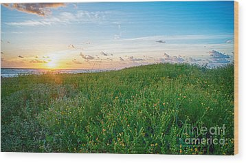 Field Of Flowers At Sunrise  Wood Print by Tammy Smith
