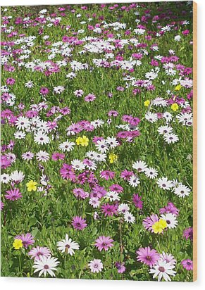 Field Of Flowers Wood Print by Deborah Montana