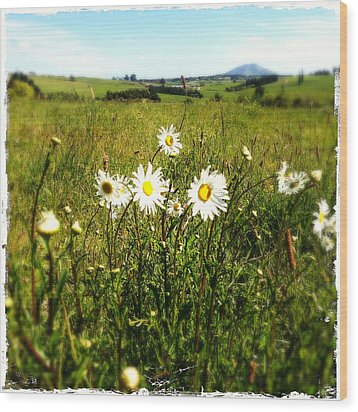 Field Of Flowers Wood Print by Les Cunliffe
