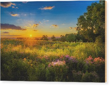 Field Of Flowers Sunset Wood Print by Mark Goodman