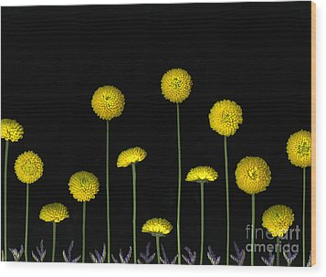 Field Of Gold Wood Print by Christian Slanec