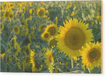 Field Of Happiness Wood Print