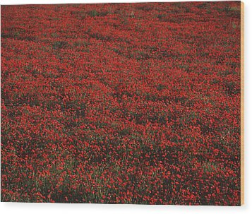 Field Of Red Poppies Wood Print by Ian Cumming