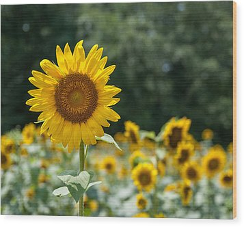 Field Of Sun Wood Print by Brian Young