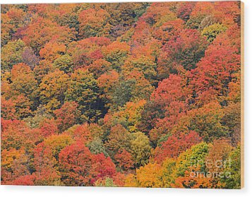 Field Of Trees From Above During Fall Foliage. Wood Print