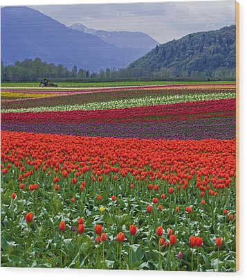 Field Of Tulips Wood Print by Jordan Blackstone