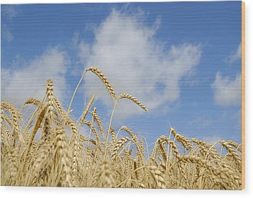 Field Of Wheat Wood Print
