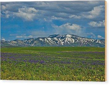 Field Of Wildflowers Wood Print by Don Schwartz