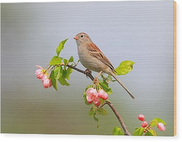 Field Sparrow On Apple Blossoms Wood Print by Daniel Behm