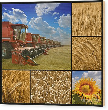 Fields And Grain Collage Wood Print by Boon Mee