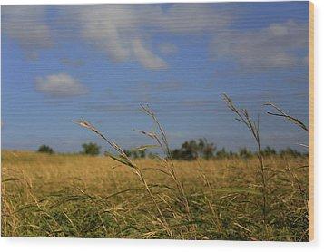 Fields Wood Print by Mario Legaspi