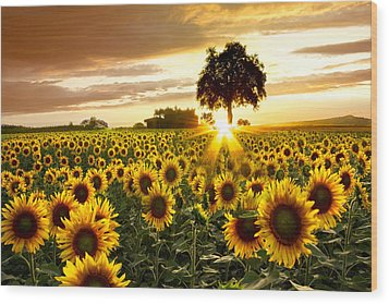 Fields Of Gold Wood Print by Debra and Dave Vanderlaan