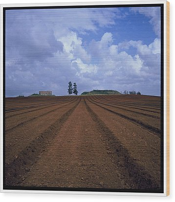 Fields Of Hod Hasharon Wood Print by Dubi Roman
