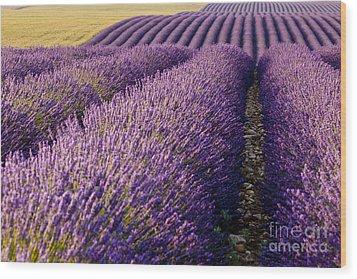 Fields Of Lavender Wood Print by Brian Jannsen