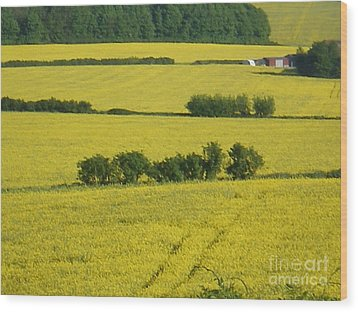 Fields Of Yellow Wood Print by Ann Fellows