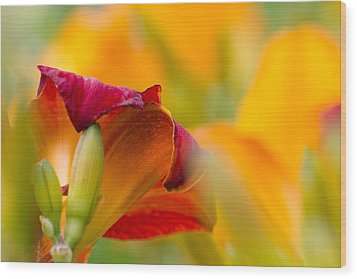 Wood Print featuring the photograph Fiery Flora by Mary Amerman
