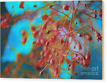 Fiery Red Clusters - Illawarra Flame Tree Wood Print by Kerryn Madsen-Pietsch