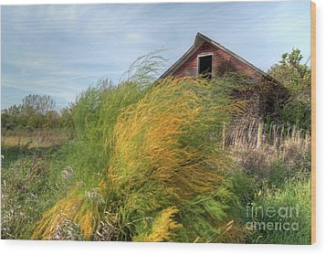 Fiery Weed And Barn Wood Print