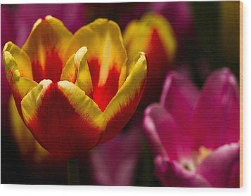 Finally Spring Wood Print by Haren Images- Kriss Haren