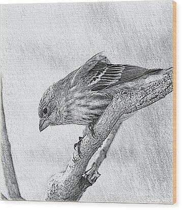 Finch Digital Sketch Wood Print