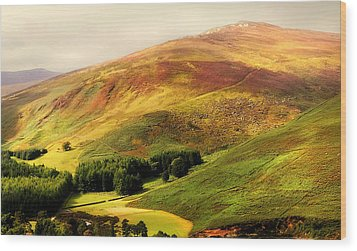 Find The Soul. Golden Hills Of Wicklow. Ireland Wood Print by Jenny Rainbow
