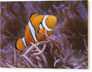 Finding Nemo Wood Print by Shannon Rogers