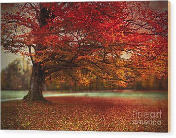 Finest Fall Wood Print by Hannes Cmarits