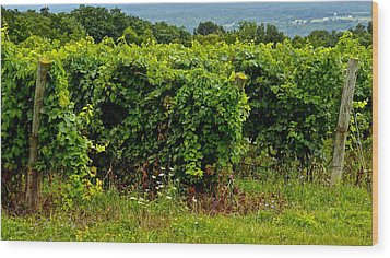 Finger Lakes Vineyard Wood Print by Frozen in Time Fine Art Photography