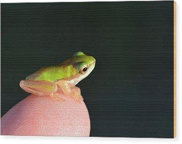 Finger Tip Baby Frog Wood Print