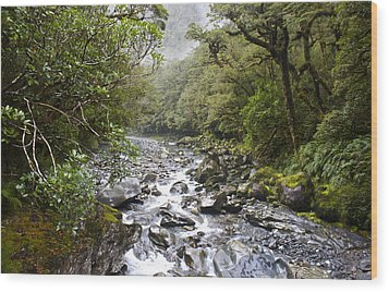 Fiordland National Park New Zealand Wood Print by Venetia Featherstone-Witty