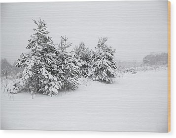 Fir Trees Covered By Snow Wood Print