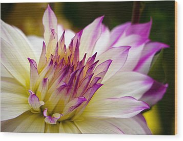 Wood Print featuring the photograph Fire And Ice - Dahlia by Jordan Blackstone