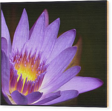 Wood Print featuring the photograph Fire Lilly by Kim Andelkovic