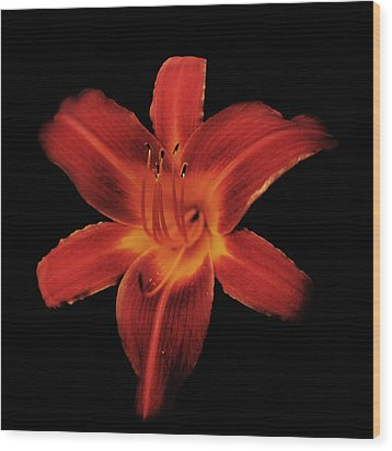 Fire Lily Wood Print by Michael Porchik
